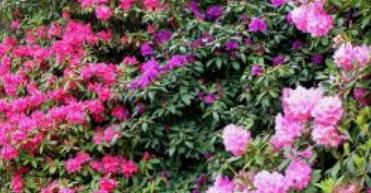 related color garden