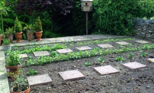 planting tips for beginners on basic gardening