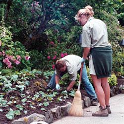perennials or annuals