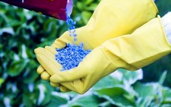 inorganic fertilizers