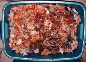 plastic worm compost bin