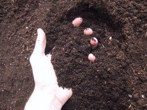 soil - Garden Soil